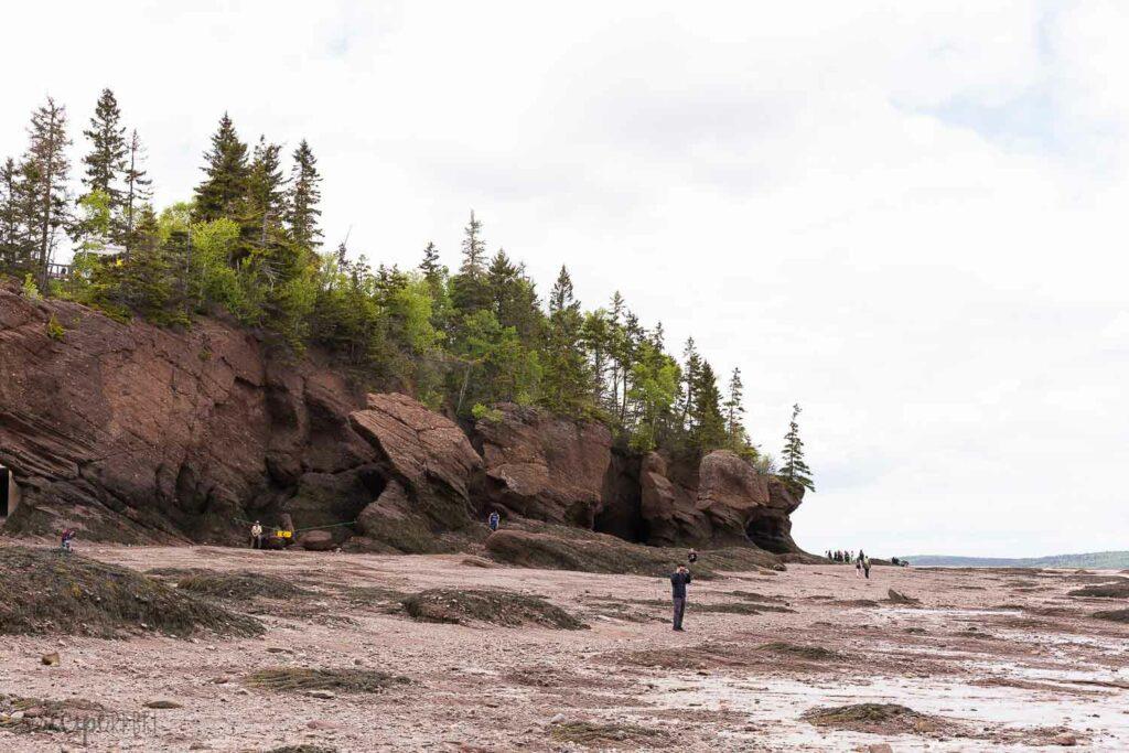 hopewell rocks from the ocean floor low tide